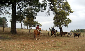 Durango Cattle Farming